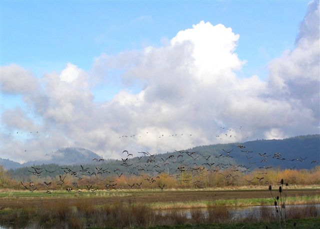 Calapooia Valley